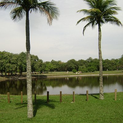 Lago do bosque