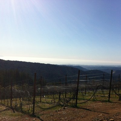 View of the ocean and Monterey off in the left distance from the winery