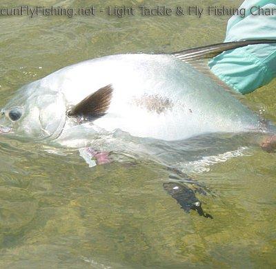 Cancun Fly Fishing Charters