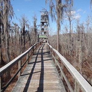 The boardwalk looking at firetower