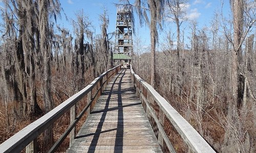 The boardwalk looking at firetower