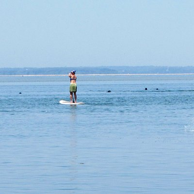 Paddling through a colony of 100 seals, splashing all around us!
