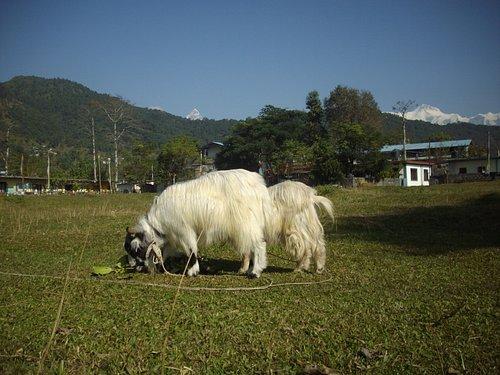 The Tashiling Tibetan Settlement in Pokhara.
