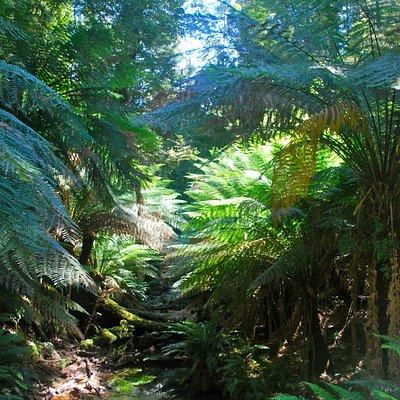Forest around Beauchamp Falls