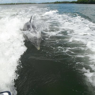 one of the dolphins coming up to the boat!