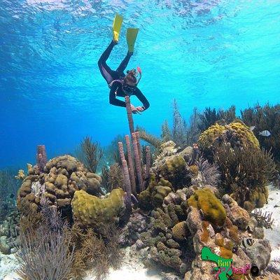 Klein Bonaire coral reef.