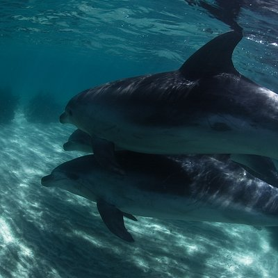 Dolphins that stayed all day