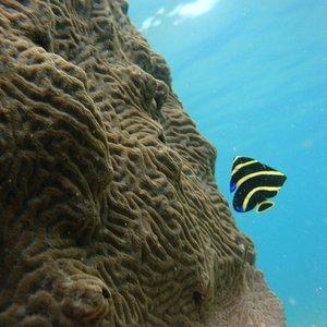 Beautiful fish near wester edge of beach