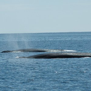Fin Whales Whale Watch West Cork