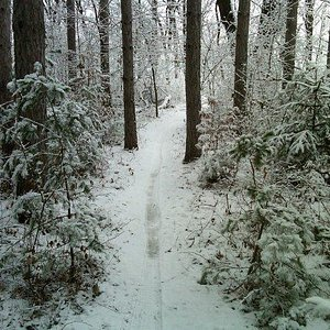 First snow of the season on Pines