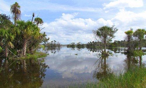 Wetlands on an overcast day