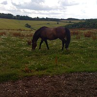 One of the horses in the field