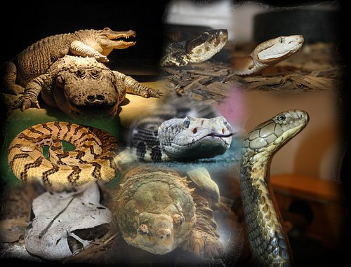 Reptiles of luray zoo