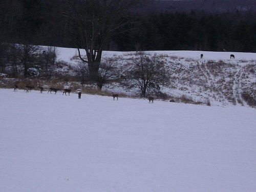 Wildlife at the base!