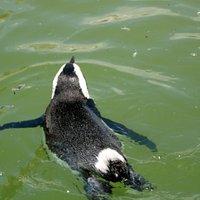 SA Penguins at Samrec
