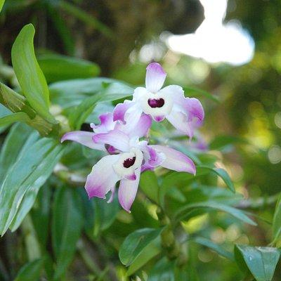 Beaucoup d'orchidées