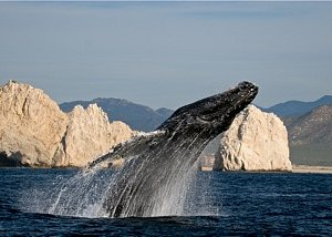 Intimate whale watching