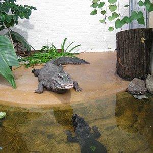 Das Reptilienhaus