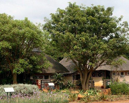traditional medicinal plant displays