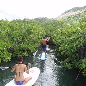 SUP Mangrove Tour