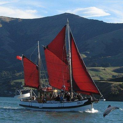 Fox II Sailing in Akaroa Harbour