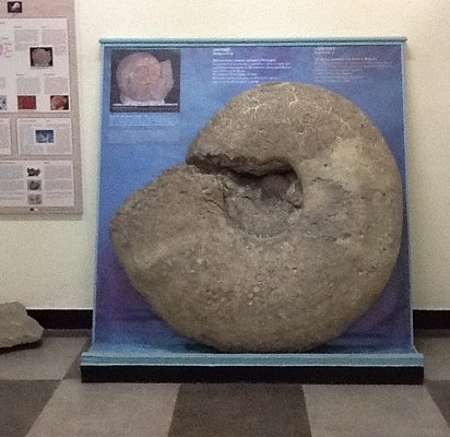 giant fossil