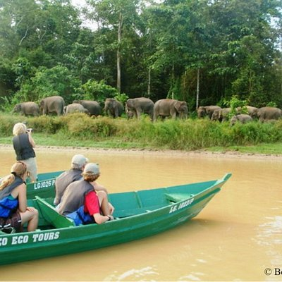 Responsible travel: A river cruise using four stroke engine and electric motor up the Kinabatang