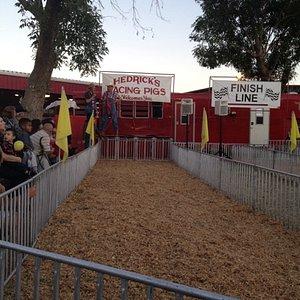 Pig races at the fair