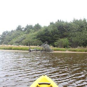 kayaking through estuary