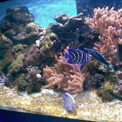 Tulcea Aquarium