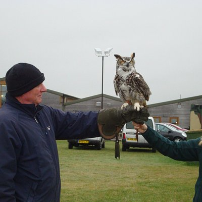 Alfie the large owl