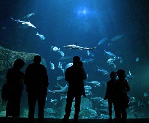 l'Aquashow, aquariums et spectacle d'oiseaux
