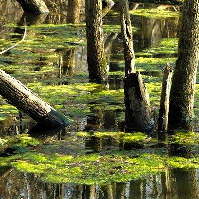 Westminster Ponds Frog Pond