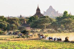 bullock carts and pagodas
