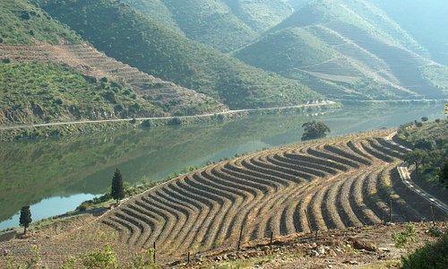 Douro, Wine Region