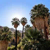 Palm oasis