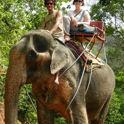 Driving the elephant