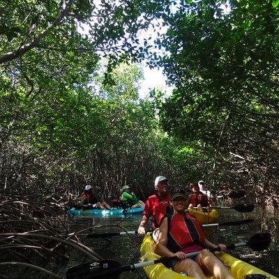 Mangrove Exploration