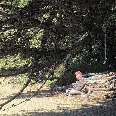Beach scene - Ulva Island