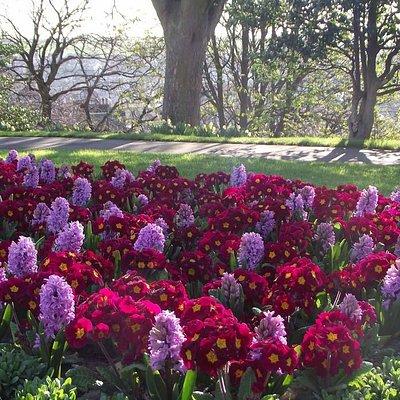 Spring Bedding Pannett Park