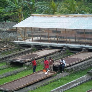 Watching the workers from the dining room process cocoa beans