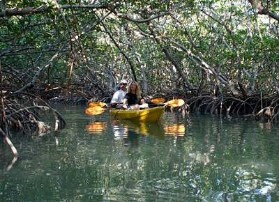Explore our beautiful mangroves and 2 state parks