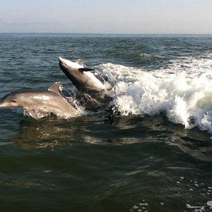 Dolphins playing as we head out from dock
