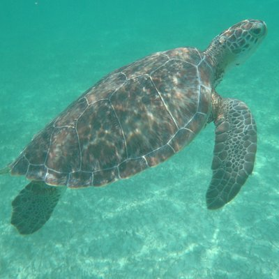 mas tortugas