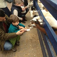 our little boy feeding the goats