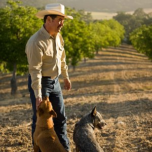 Our walnut orchard is entirely dryland organic, which means our walnuts are produced with nothin