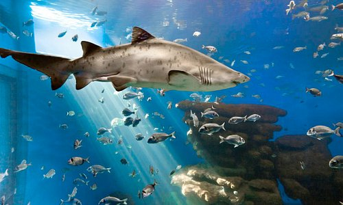 Big blue Palma Aquarium
