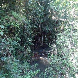 Mbagathi river