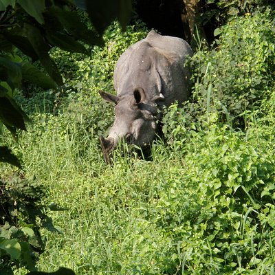 Experience Wildlife Encounters at Chitwan National Park