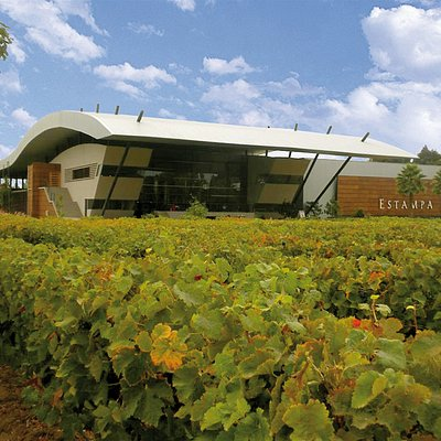 Winery with Nursery Vineyard - Learn about the different varietals in the vineyards!